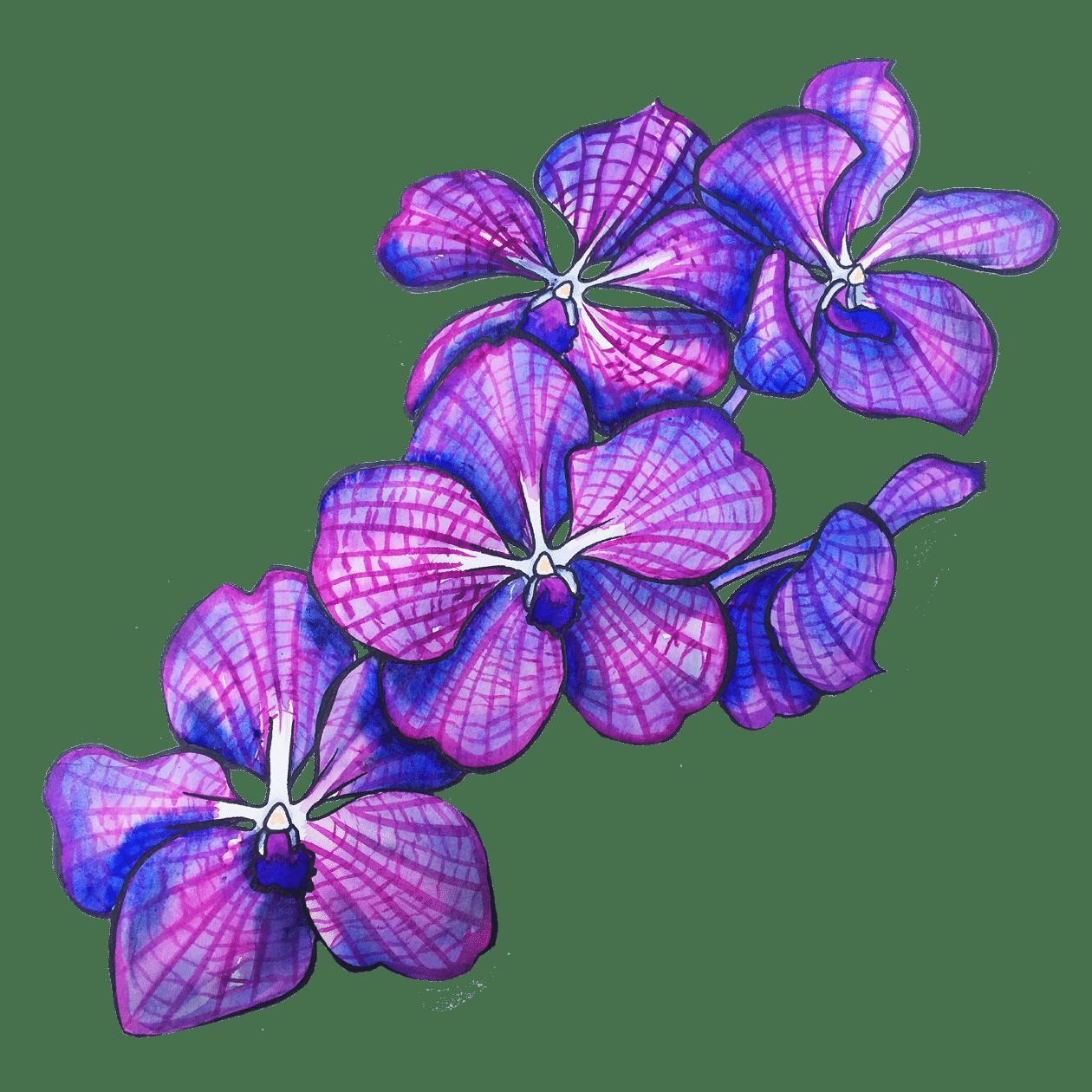 orchidées du foulard Succès de Manie V.